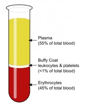 After centrifugation, the platelets thicken on the surface of the gel and the buffy coat can be easily and accurately identified.